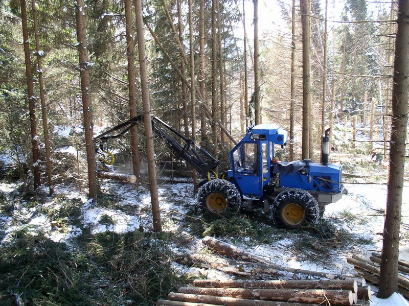 Národní park Šumava a těžba dřeva