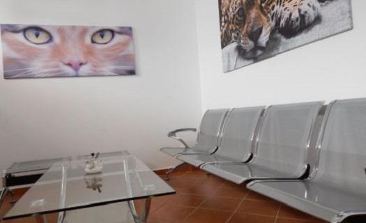 Čekárna pro kočky - přívětivé prostředí pro kočky se samostatnou čekárnou