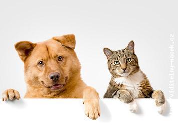 Chirurgické zákroky Jablonec nad Nisou - kompletní veterinární služby pro velká i malá zvířata