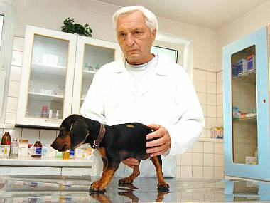 Pravidelná veterinární péče