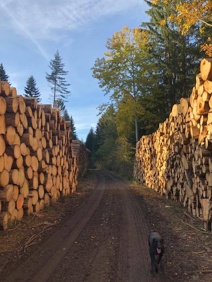 Komplexní lesnické služby
