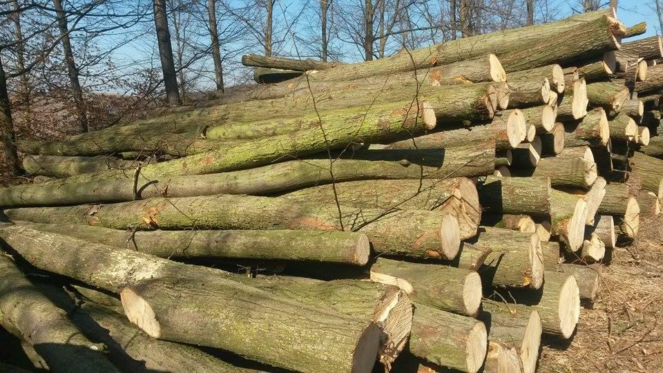 Údržba lesů