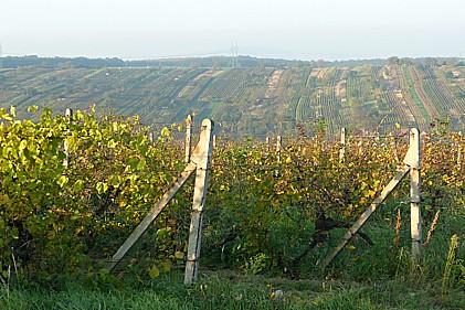 Vinařství Igor Herzán, pěstování, výroba a prodej červených, bílých a růžových vín