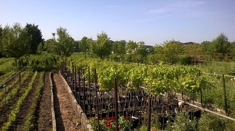 Velkoobchod ovocných a okrasných dřevin – ovocná školka, vlastní produkce i tuzemský dovoz