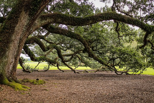 Inventarizace stromů měst a obcí