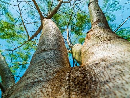 Certifikovaný arborista