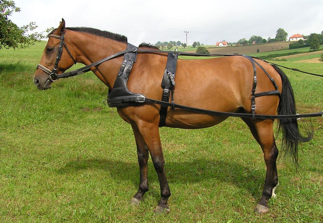 Postroje na koně a potřeby pro šermíře ruční výroby