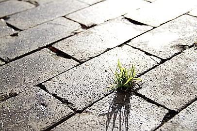 DAP. a.s., Praha, výstavba  a rekonstrukce komunikací z asfaltu