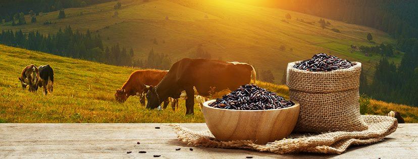 Krmné směsi, originální výroba chutného krmiva pro koně, drůbež, hospodářská zvířata