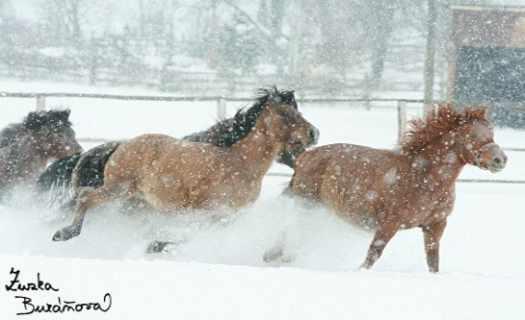 Farma Olšovka, ustájení koní, jezdecké kurzy, firemní teambuildingy i školy v přírodě