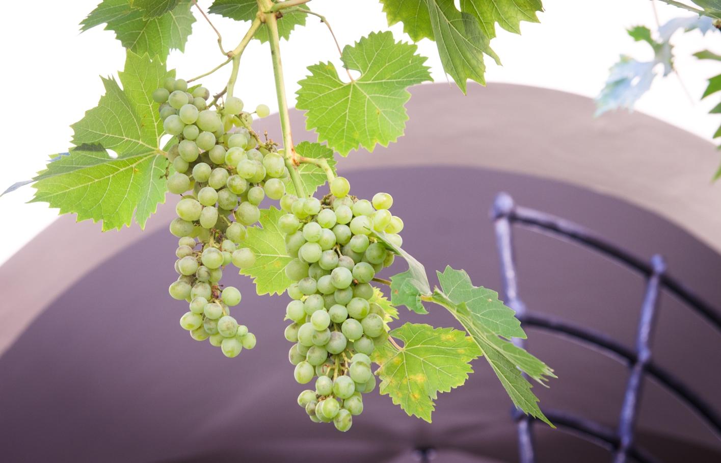 Řízená degustace vín ve vinném sklípku Mikulov