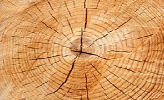 Kompletní lesnická činnost, prodej palivového a krbového dřeva s vysokou výhřevností