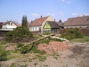 Profesionální péče o les, zahradu i ovocný sad, Martin Plachta - lesnické a zahradnické práce