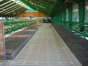Betonové stájové rošty pro čistý chov dobytka, Klatovy