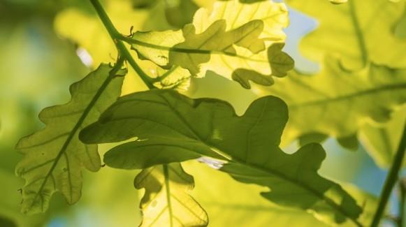 Pomalu rozpustná hnojiva v prášku - ekologicky šetrná i ekonomicky výhodná
