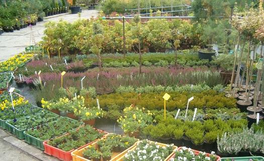 Pěstování stromků, keřů, okrasných rostlin, prodej školkařského materiálu