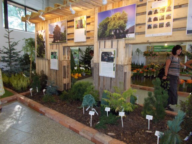 Ovocná a okrasná školka Příbor, stromy, keře, růže, azalky