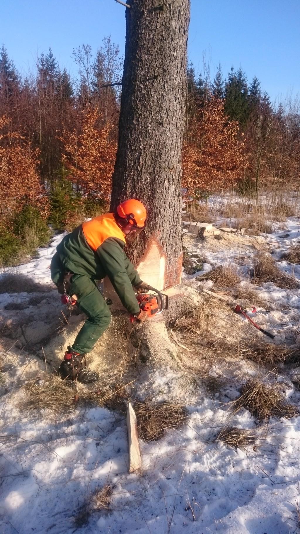 Střední lesnická škola Žlutice, těžba, manipulace dříví, pěstování lesa