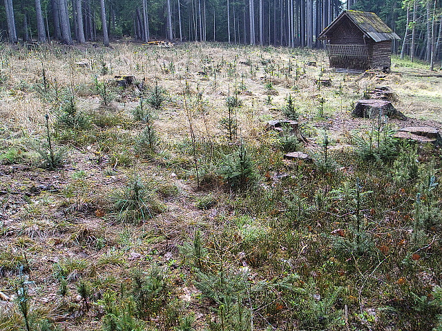 Pěstební a těžební práce pro vlastníky lesa, služby v lesnictví