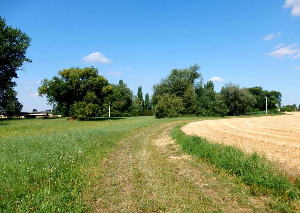 Obec Sány v Polabí, rovinatá krajina, cyklotrasy