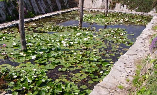 Vodní zahradnictví s pěstováním a prodejem vodních rostlin