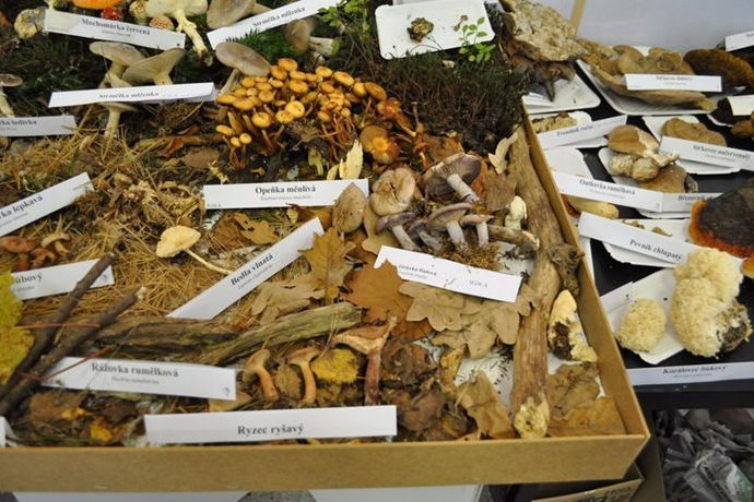 Podzimní zahradnické trhy, Olima, podzimní Flora Olomouc
