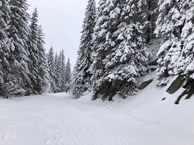 COMVIA BUS, s.r.o., Praha 5, jednodení lyžařské zájezdy v ČR i do zahraničí