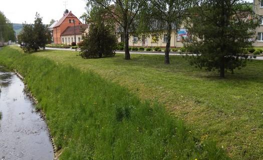 Rizikové kácení i výsadby stromů a zahrad