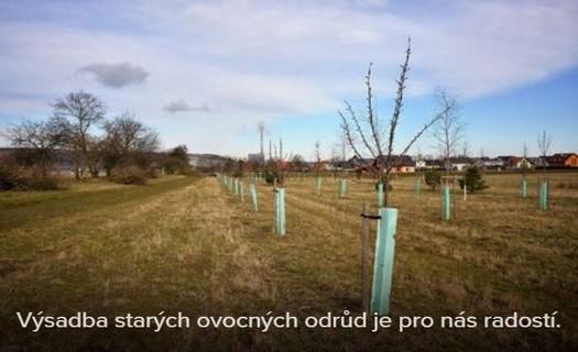 Profesionální arboristické práce pomocí stromolezecké techniky