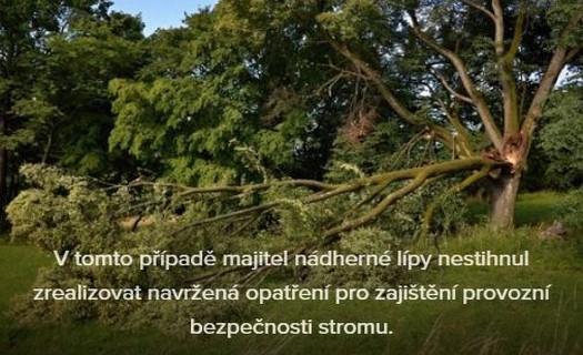 Kácení stromů moderními technologiemi, Marek Vidlák
