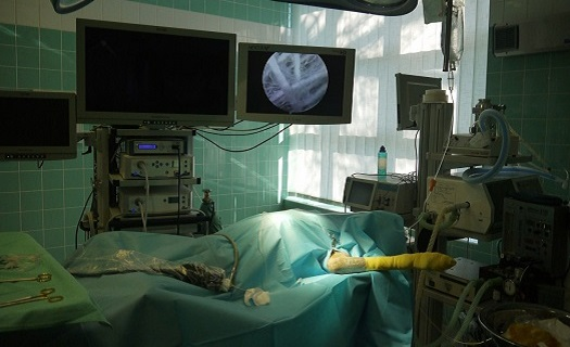 Veterinární artroskopie - přesná diagnóza a operace kloubních onemocnění