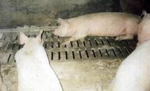 Stájové rošty z betonu Klatovy