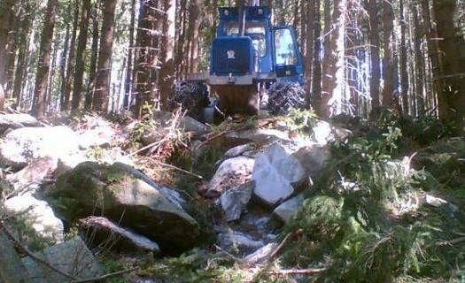 Těžba dřeva Šumava, lesnické práce, mýtní těžba