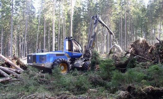 Těžba dřeva Šumava, přeprava dřeva, mýtní těžba dřeva
