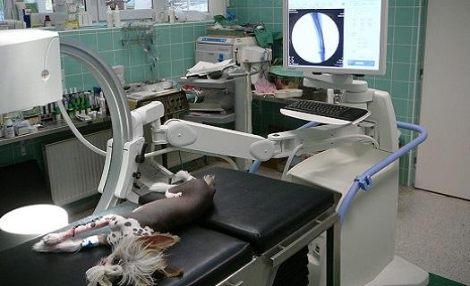 Chirurgická řešení vad kloubního aparátu