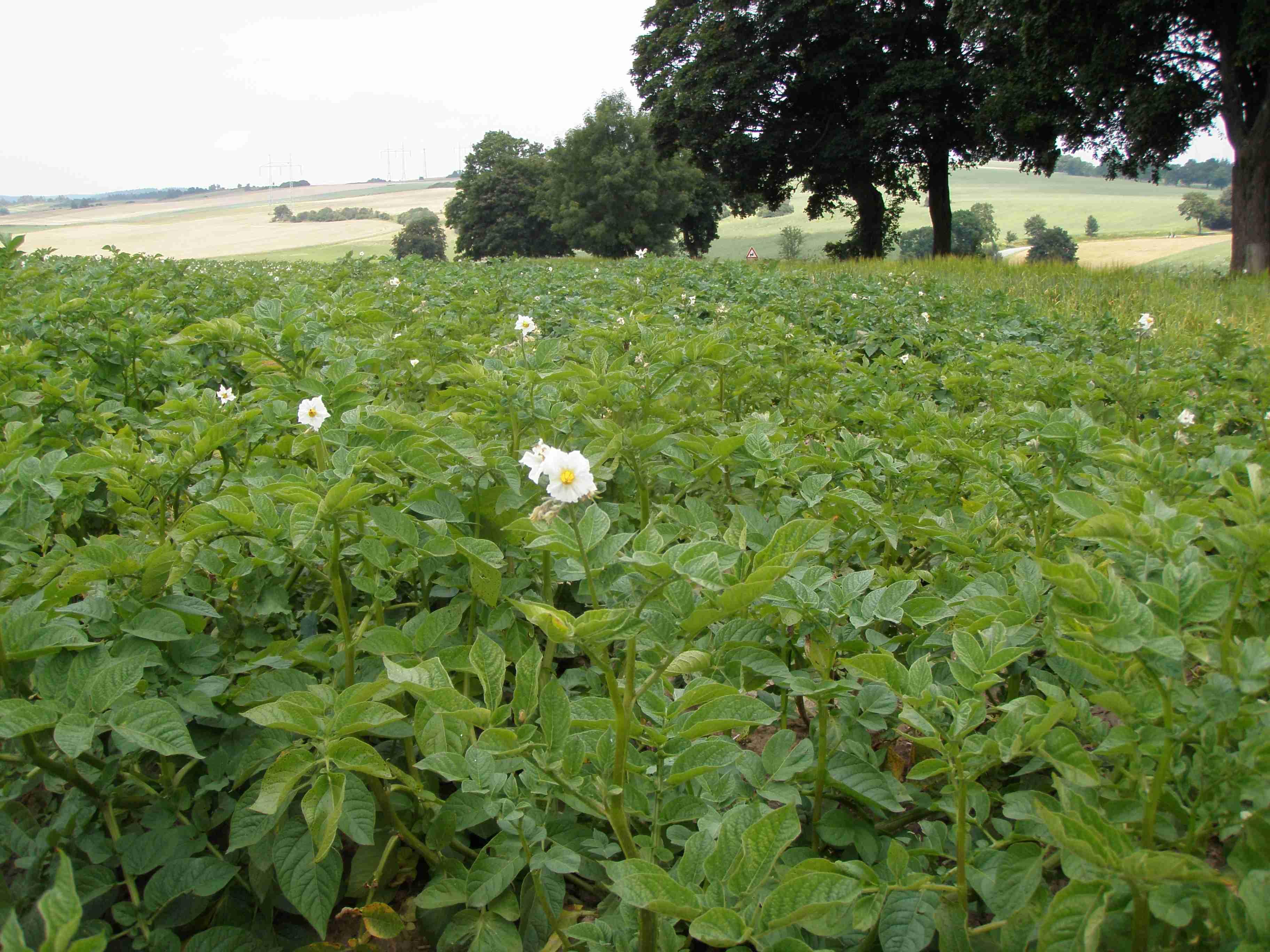 Výzkum v rostlinné výrobě, šlechtění a výživa plodin, poradenství a vedení seminářů