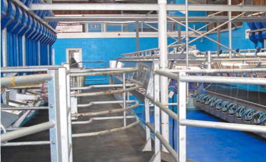 Dojírny, paralelní stroje na dojení krav či koz
