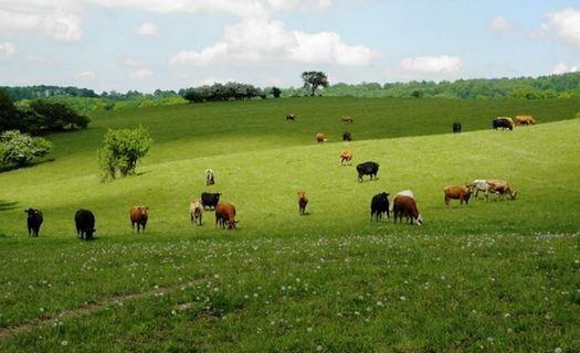 Ekostatek, chov koní a masného skotu Hodonín, prodej koní, masný skot, prodej lučního sena