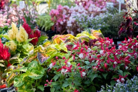 Prodej okrasných rostlin, keřů a příslušenství na zahradu –  keramika, okrasný štěrk