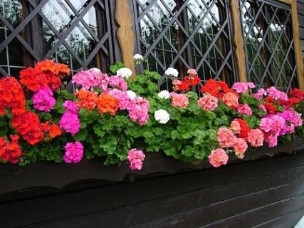 Prodej balkónovek v zahradnictví