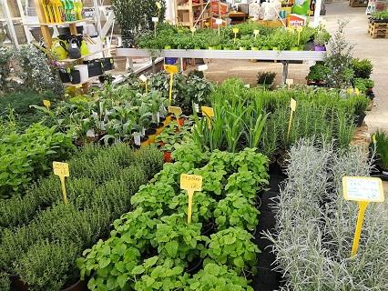 Léčivé bylinky a bylinky na vaření - prodej bylinek v zahradnictví