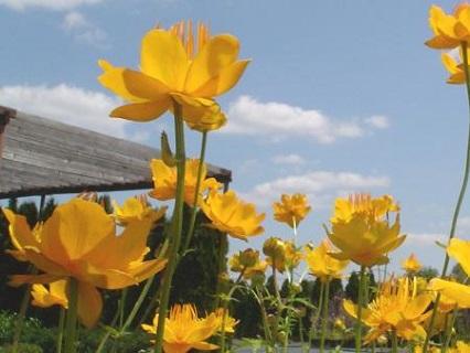 Prodej okrasných dřevin a trvalek,  nádherně kvetoucích rododendronů a azalek