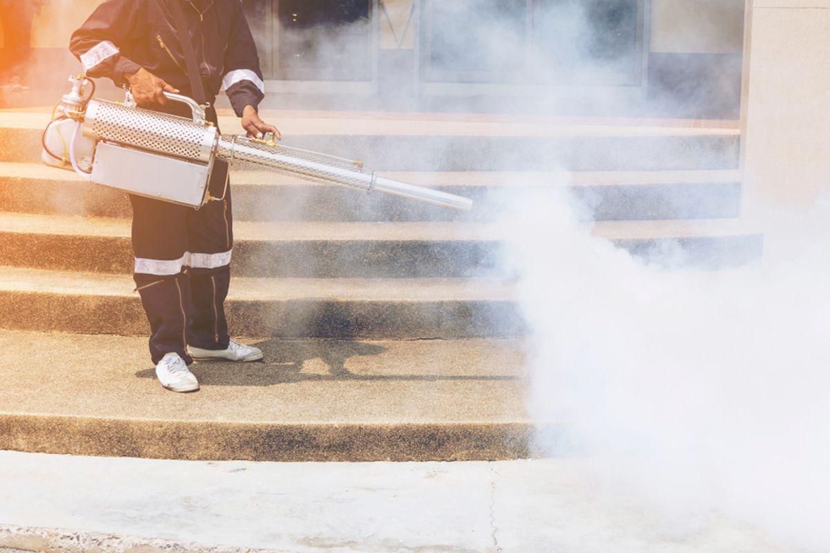 Odstranění plísní a hmyzu v provozech