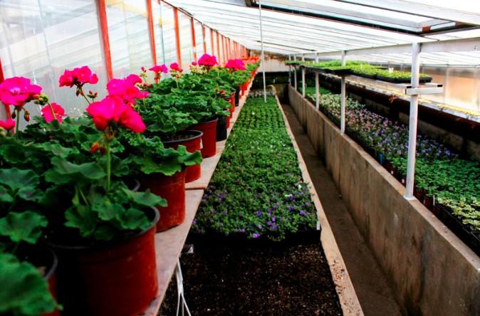 Prodej květin a letniček - Zahradnictví Petr Křeček