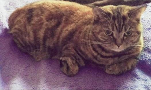 veterinář Zlín - veterinární péče pro kočky, psy