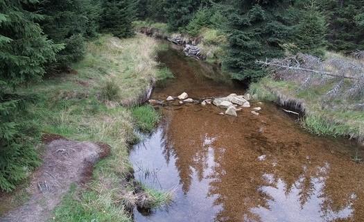 Ekologie lesa, banka osiv