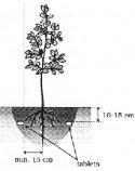 Correct application of slowly dissolvable tablet fertilizers the Czech Republic