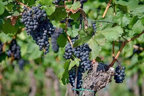 Objednejte si přes e-shop bílé, červené či růžové víno, nebo rovnou celý degustační set