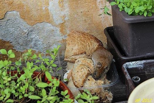 Rychlá deratizace a dezinsekce - likvidace, hubení hlodavců a štěnic
