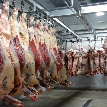 Prodej českého hovězího masa